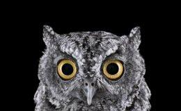 'Owls' by BradWilson.