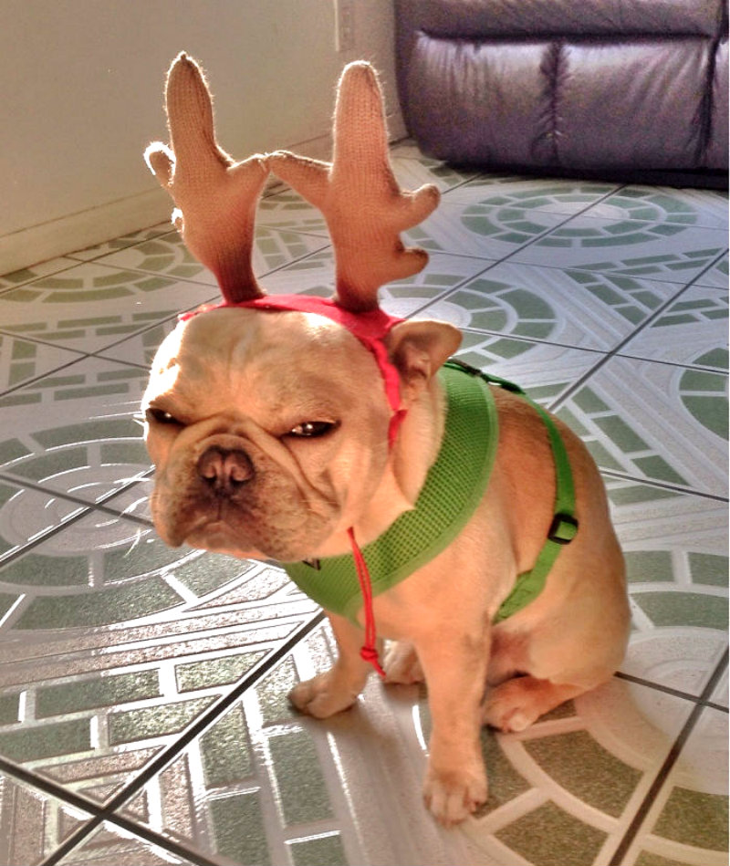 animals-do-not-like-christmas6-5835915c9f9a3__700