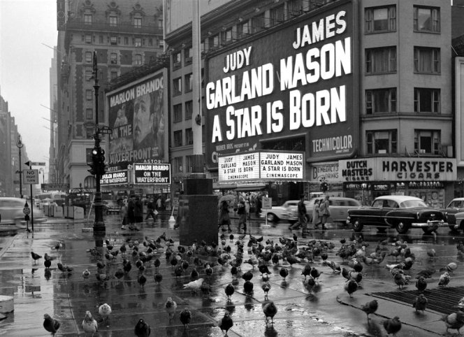 pigeons-gather-in-times-square-on-a-rainy-day-new-york-city-1954