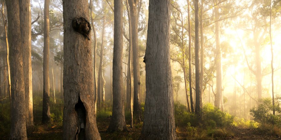 forest-grump-pano-ausgeo_web