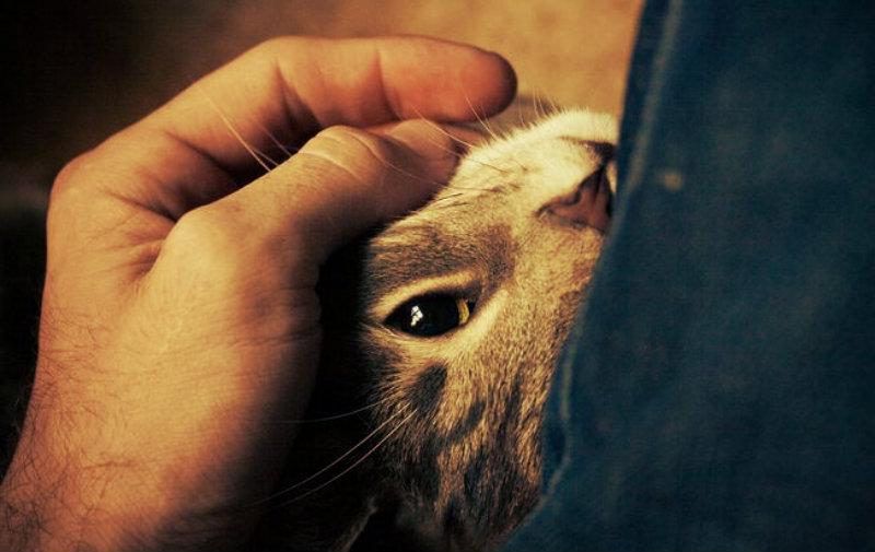 purring-kitty