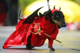Cute Devil Dog joins Parade in St Petersburg, Russia.