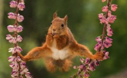 Cheeky little Squirrel does the 'splits'.