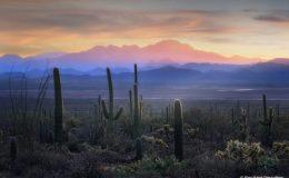 Saguaro Sunset, Arizona.